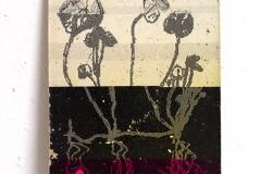 herbarium_022
