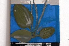 herbarium_048breitwegerich