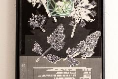 herbarium_049g